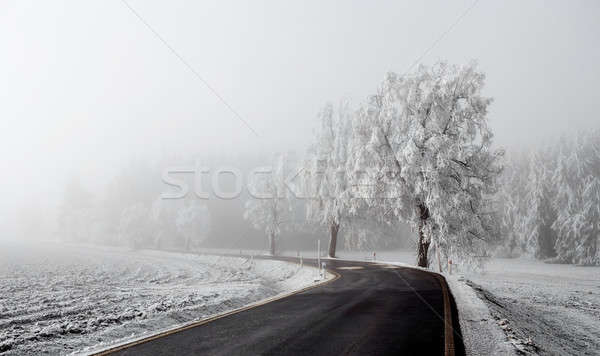 winter Road going in to the fog Stock photo © artush
