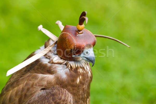 Ritratto falcon cap verde sport uccello Foto d'archivio © artush