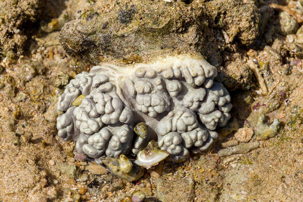 мозг коралловые низкий волна Индонезия индийской Сток-фото © artush