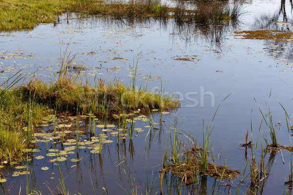 Panorama bella acqua gigli delta Botswana Foto d'archivio © artush