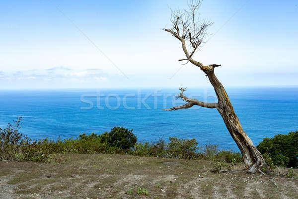 枯れ木 バリ ポイント ダイビング 場所 島 ストックフォト © artush