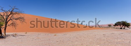 Düne Namibia toter Baum besten Landschaft Welt Stock foto © artush