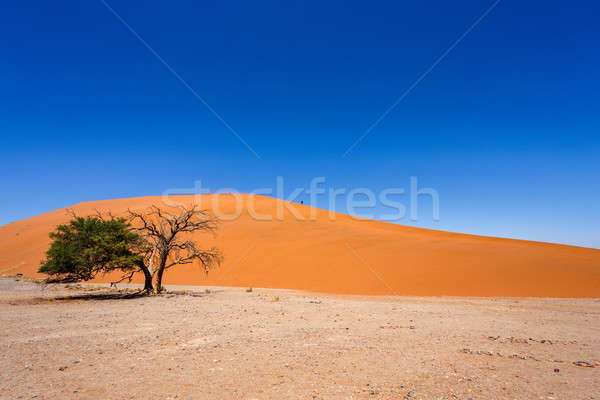 Wydma Namibia najlepszy krajobraz słońce Zdjęcia stock © artush