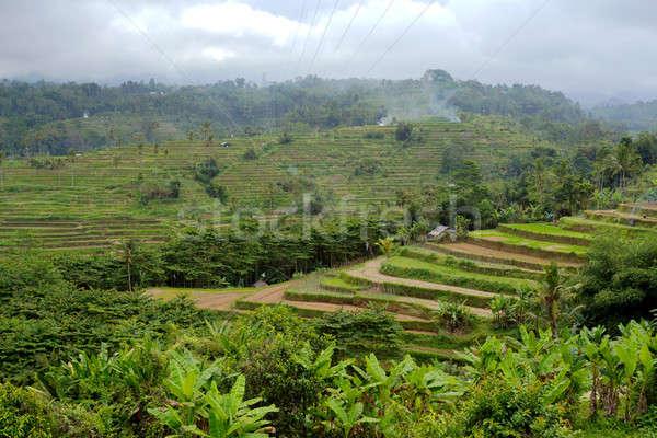 Arroz campos panorama belo central bali Foto stock © artush