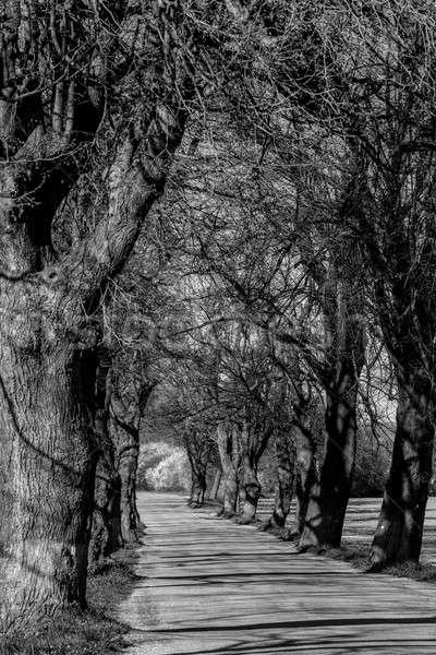 アスファルト 道路 ツリー 路地 美しい 春 ストックフォト © artush