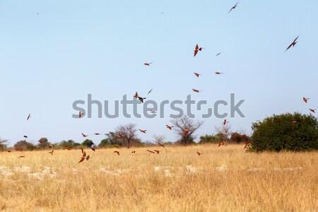 Groot kolonie bank rivier Namibië Stockfoto © artush