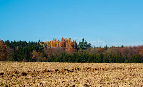 Autumn lanscape colour trees and meadow Stock photo © artush