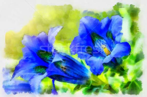 Illustration of trumpet gentiana blue spring flower in garden Stock photo © artush