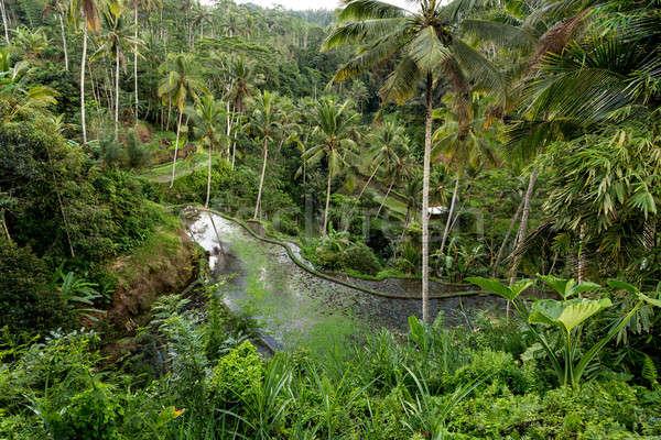 Stock photo: Rice terraced paddy fields in Gunung Kawi