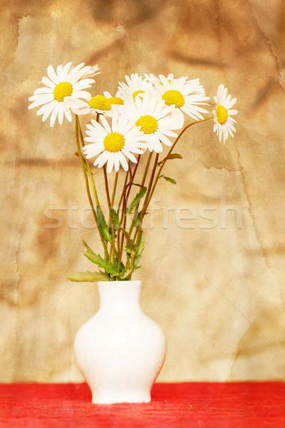 daisy flower in white vase with shallow focus Stock photo © artush