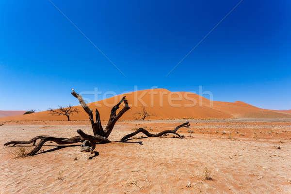 дюна Намибия мертвых деревьев лучший пейзаж солнце Сток-фото © artush
