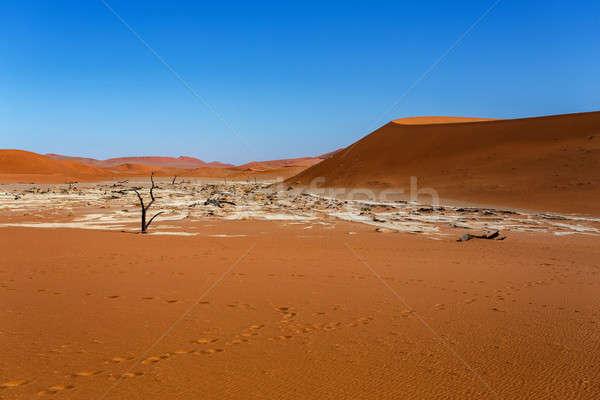 Sossusvlei beautiful landscape of death valley Stock photo © artush