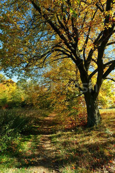 ősz tájkép ősz színes fák park Stock fotó © artush