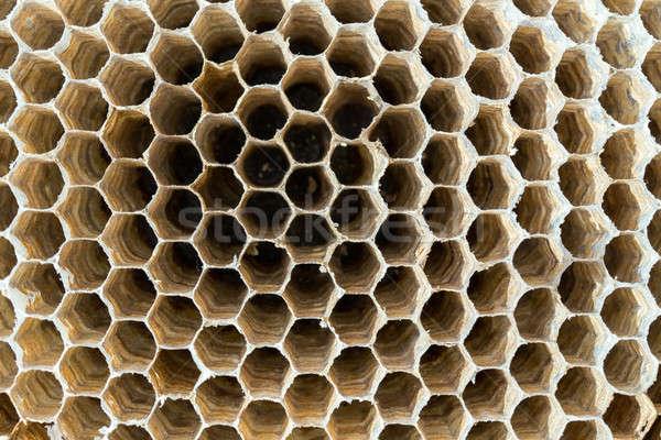 Vespa ninho textura vazio fundo Foto stock © artush