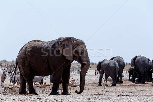 Lotado elefantes zebras parque Namíbia animais selvagens Foto stock © artush