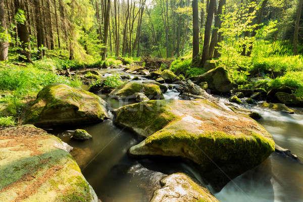 small wild river in Bohemian forest  Stock photo © artush