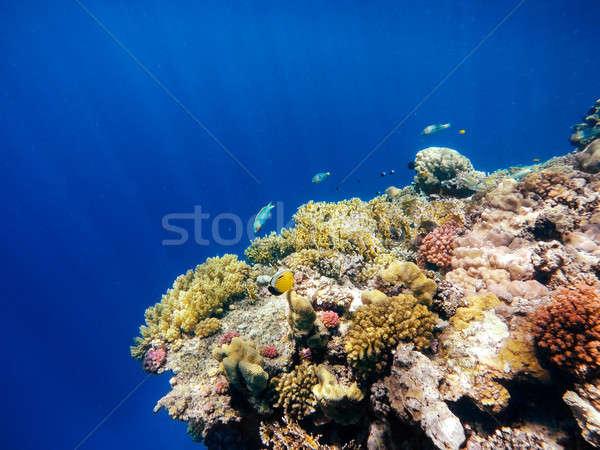 Korall hal Vörös-tenger Egyiptom pillangó mély Stock fotó © artush