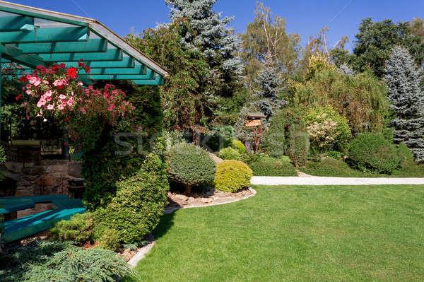 Piękna ogród projektu lata drzew zielona trawa Zdjęcia stock © artush