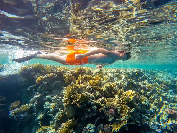 Young boy Snorkel swim in shallow water with coral fish Stock photo © artush