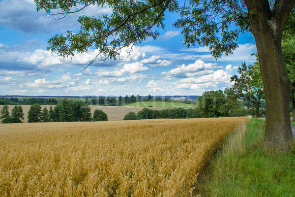 Vidéki nyár tájkép mező legelő hdr Stock fotó © artush
