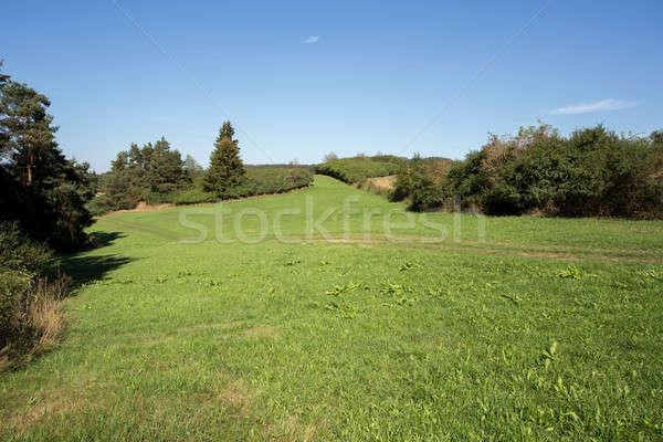 summer rural summer landscape  Stock photo © artush