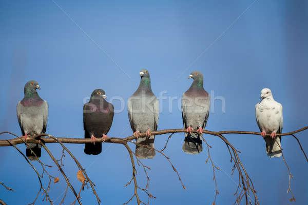 Сток-фото: сидят · филиала · группа · внутренний · Blue · Sky · дерево