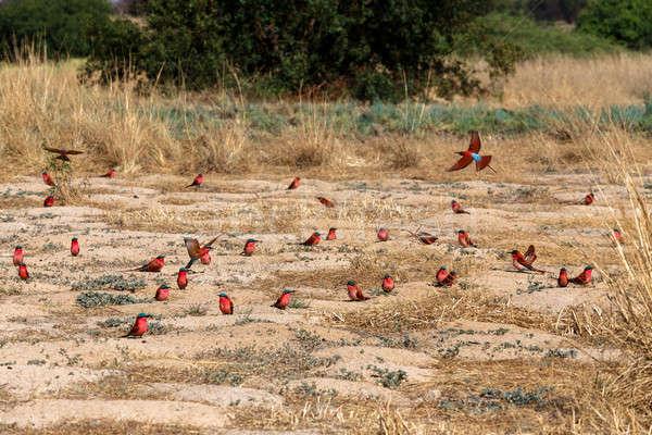 Colonie banque rivière Namibie Photo stock © artush