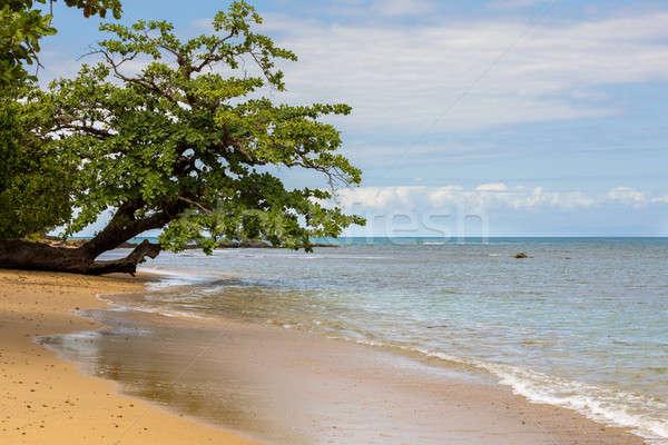 Beautiful dream paradise nature beach madagascar Stock photo © artush