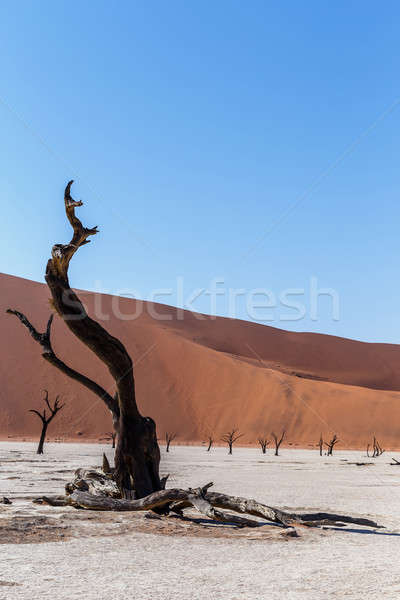 Mooie landschap verborgen woestijn zonsopgang dode Stockfoto © artush