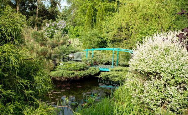 Faible vert passerelle étang jardin printemps Photo stock © artush