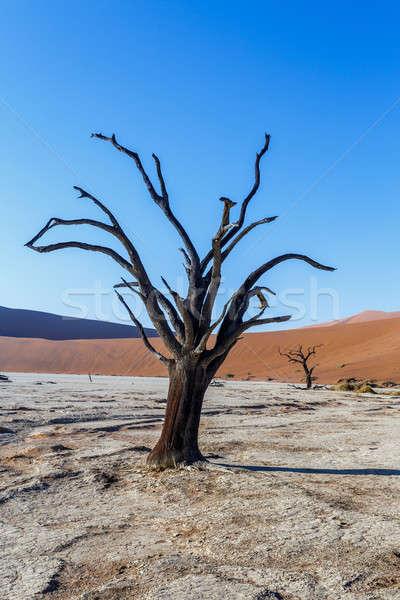 Belo paisagem morte vale Namíbia nascer do sol Foto stock © artush