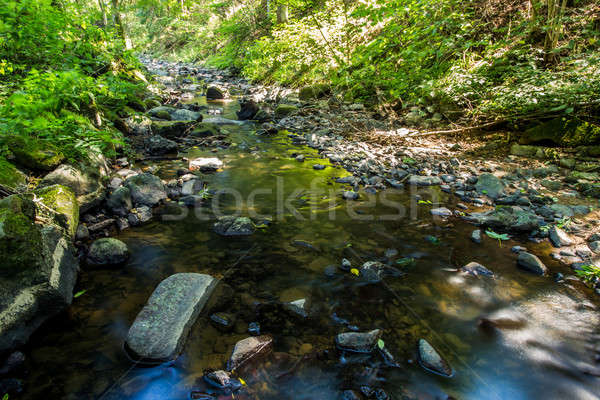 Stock photo: small wild river in Bohemian forest
