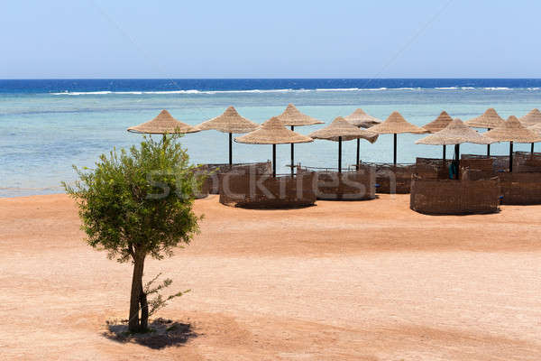 Beach umbrellas and blue sky background Stock photo © artush