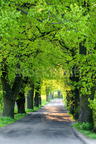 Green spring trees in alley Stock photo © artush