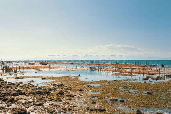 Sogno spiaggia basso marea ragazzo bali Foto d'archivio © artush