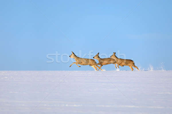 does running on snowy horizon Stock photo © artush