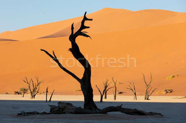 Martwych Namibia Afryki piękna rano kolory Zdjęcia stock © artush