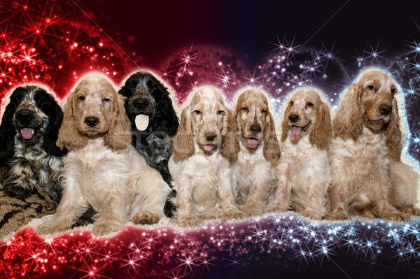 portrait of english cocker spaniel in abstract background Stock photo © artush