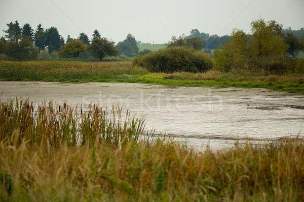 reeds at the pond, autumn scene Stock photo © artush