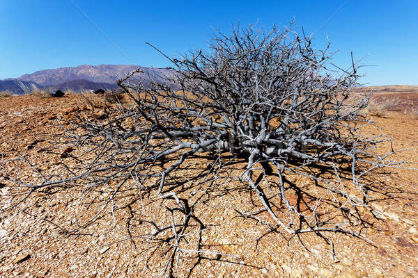 Stock photo: fantrastic Namibia desert landscape
