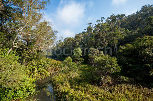 Madagascar beautiful landscape Stock photo © artush