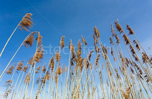 Lagoa blue sky naturalismo paisagem beleza verde Foto stock © artush