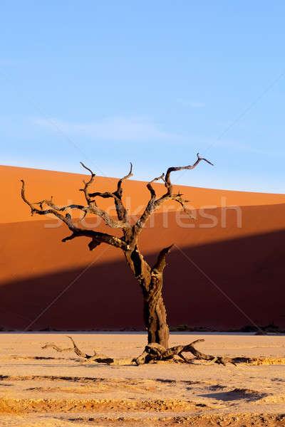 Martwych krajobraz Namibia Afryki piękna wieczór Zdjęcia stock © artush