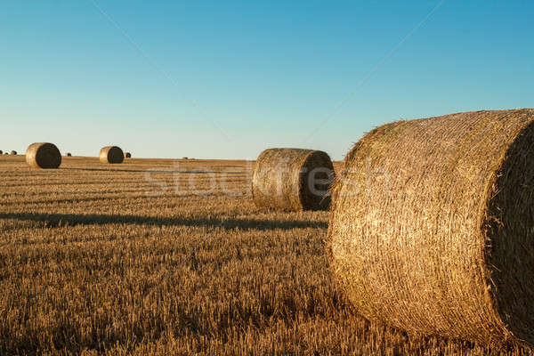 hay bale in the foreground of rural field  Stock photo © artush