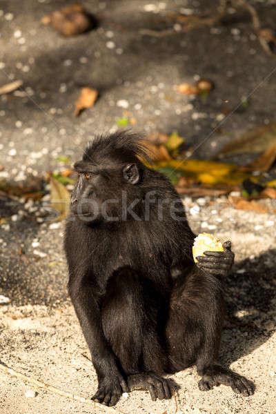 портрет Индонезия обезьяна обезьяны черный парка Сток-фото © artush