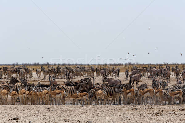 crowded waterhole with wild animals Stock photo © artush