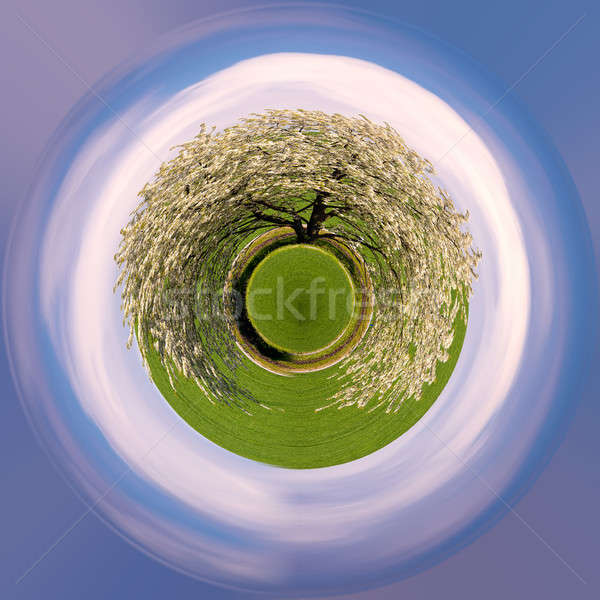 tiny planet spring flowering tree in countryside Stock photo © artush