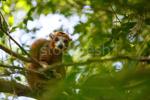 парка Мадагаскар дерево высушите лиственный Сток-фото © artush