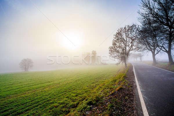 ストックフォト: 農村 · 道路 · 日の出 · ツリー