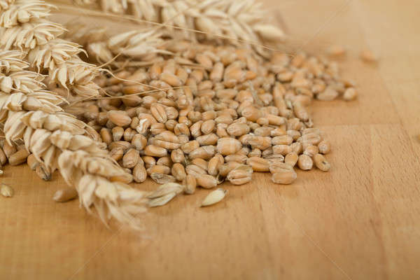 pile of organic whole grain wheat kernels and ears Stock photo © artush